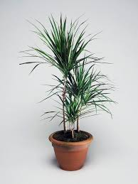 Best Plant For Bathroom by The Best Houseplants For Green Thumb Newbies Hgtv U0027s Decorating