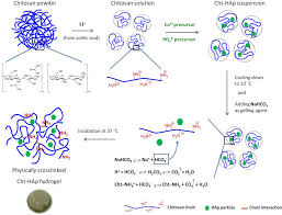 100 Ph Of 1 Figure From Cellular Hydrogels Based On PHresponsive