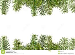 Download Christmas Tree Branches Isolated On White Background Stock Photo