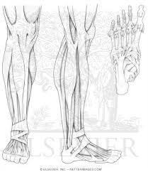 Anatomy Handbook With Coloring Pages Bigcatfhsuedu Biology