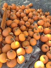 Myers Pumpkin Patch Greeneville by Gentry U0027s Farm Is A 7th Generation Family Farm And Has Been In