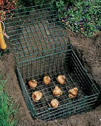 bulb cage buy from gardener s supply