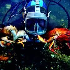 Pacific Undersea Gardens CLOSED 12 Reviews Aquariums 490