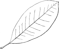 Fall Leaves Outline Clipart Library