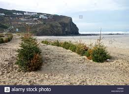 Driftwood Christmas Trees Cornwall by Sand Erosion Protection Stock Photos U0026 Sand Erosion Protection