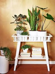 Plant stands indoor plus small plant holders plus indoor plant