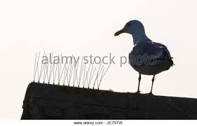 anti bird spikes stock photos anti bird spikes stock images alamy