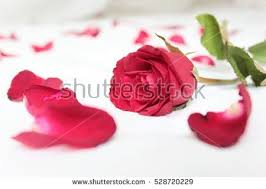 Bed Roses Stock Royalty Free & Vectors