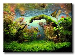 31 Best Aquarium Landscapes Images On Pinterest | Aquarium ... 329 Best Aquascape Images On Pinterest Aquarium Ideas Floratic Visiting Paradise At Shah Alam Planted Aquarium Aquascape Things Aquariums Aquascaping Malaysia Diy Pertama Kali Aquascaping October 2010 Of The Month Ikebana Aquascaping World Sumida Aquarium Reloaded Fish Tanks And Designs Awesome A Moss Experiment Its All About Current Low Tech Tank Cuisine Wonderful Small Cubical Styles Planted The Surreal Submarine Amuse