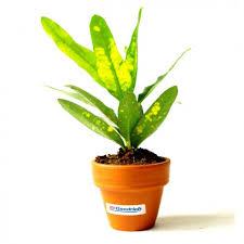 plante de bureau plante dépolluante de bureau en pot terre cuite objet pub nature
