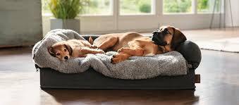 schlafplatz für den hund tipps fressnapf