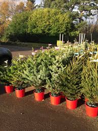 Plantable Christmas Trees Nj by Christmas Real Christmas Trees Forale Mn Online Nj In Florida 58