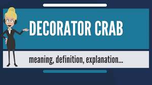 Decorator Crabs And Sea Sponges by What Is Decorator Crab What Does Decorator Crab Mean Decorator