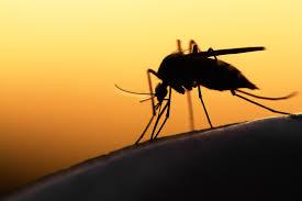 mücken motten ungeziefer was tun gegen angriffe der