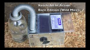 Wild Mouse - Barn Edition (Requested By Viewers)