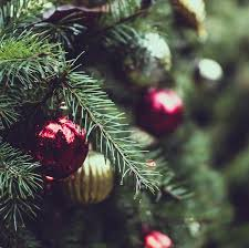 Christmas Tree Species by Timbuk Farms Christmas Trees Granville Ohio