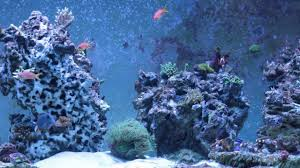 Reef Tank - 180g - Re-Aquascape - YouTube Is This Aquascape Ok Aquarium Advice Forum Community Reefcleaners Rock Aquascaping Contest Live Rocks In Your Saltwater Post Your Modern Aquascape Reef Central Online There A Science To Live Rock Sanctuary 90 Gallon Build Update 9 Youtube Page 3 The Tank Show Skills 16 How Care What Makes Great Large Custom Living Coral Aquariums Nyc