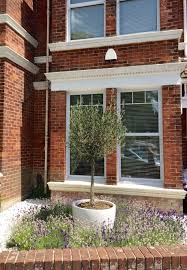 Mixed Lavender Border With Olive Tree In White Pot Brighton