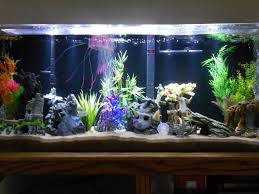 Benefits Of A Fish Tank And The Science & Feng Shui Behind It I Really Want A Jellyfish Aquarium Home Pinterest Awesome Fish Tank Idea Cool Ideas 6741 The Top 10 Hotel Aquariums Photos Huffpost Diy Barconsole Table Mac Marlborough Tank Stand Alex Gives Up Amusing Experiments 18 Best Fish Images On Aquarium Ideas Diy Clear For Life Hexagon Hayneedle Bar Custom Tanks Ponds Designs For Freshwater Modern 364 And Tropical Ov Cylinder 2