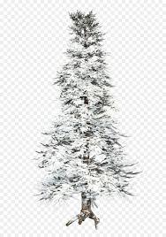 Spruce Pine Tree Fir Winter
