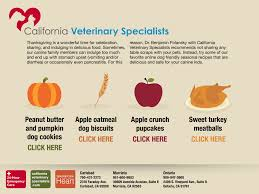 Turkey And Pumpkin For Dog Diarrhea by Thanksgiving Dog Friendly Treats California Veterinary Specialists