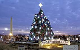 Bethlehem Lights Christmas Trees by Christmas Tree Train Christmas Ideas
