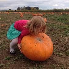 Pumpkin Patch Portland by Portland Kids Explore Sauvie Island