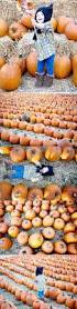 Best Pumpkin Patch Lancaster Pa by 29 Best Walgreens Images On Pinterest Mobile App Saving Money