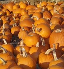 Pumpkin Patch Denver Pa by Pa U0027s Pumpkin Patch 6701 E Pacific Coast Hwy Long Beach Ca 90803