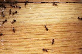 ameisengift natürliche alternativen hausmittel selber