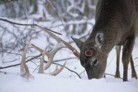 do deer antlers grow back updated 2017