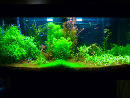 200 litres eaux de mer aquariums et vivariums forum animaux