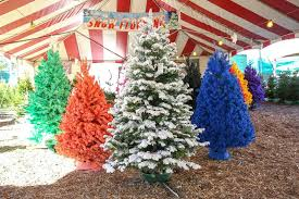 Flocked Christmas Tree White And Colored Trees Clearance