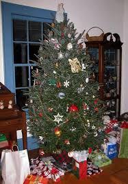 Fraser Fir Balsam The Only True Christmas Trees Abies Fraseri