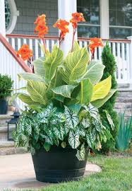 best summer bulbs for containers