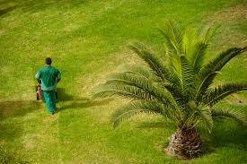 prix des palmiers exterieur engrais palmier choix d un engrais de palmier ooreka