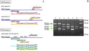bureau de la pcr use of multiplex allele specific polymerase chain reaction