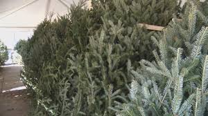 Christmas Tree Preservative Recipe Sugar by Experts Tell How To Preserve Christmas Tree
