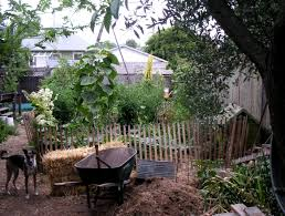 Permaculture Archives - Chickweed Patch Thriving Backyard Food Forest 5th Year Suburban Permaculture Bill Mollison Father Of Gaenerd 101 Pri Cold Climate Archives Chickweed Patch Garden Design With Permaculture Kitchen Herb Spiral Backyard Orchard For The Yards Pinterest Orchards Australian House Garden January 2017 Archology Download Design And Ideas Gurdjieffouspenskycom Sustainable Farm Future Best 25 Ideas On Vegetable Youtube