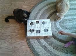 jeux pour chat avec une boite chat jeu pour chat