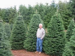 Artificial Douglas Fir Christmas Tree by Artificial Christmas Trees Noble Fir With Others Noble Fir