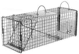 live cat trap feral or domestic cat rabbit raccoon galvanized metal live