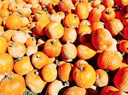 Best Pumpkin Patches In Cincinnati by Shaw Farm Milford All You Need To Know Before You Go With