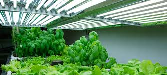 Why Use Fluorescent Grow Lights