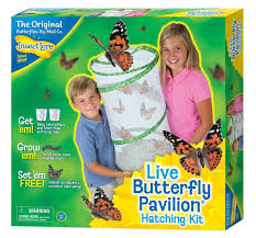 Amazon Insect Lore Butterfly Pavilion Toys & Games
