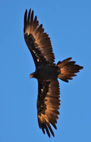 Kachemak Gear Shed Wa by 69 Best Todd Images On Pinterest Wedge Tailed Eagle Wedges And