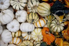 Pumpkin Patch Downtown Okc by Find Tulsa U0027s Best Variety Of Pumpkins And Pumpkin Patch Activities