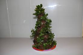 Christmas Tree Seedlings by Succulent Christmas Trees U2013 How To Make One Succulents By Jmo