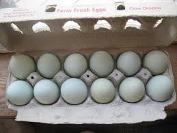 Getting The Most Out Of Your Hatching Eggs | BackYard Chickens Breeding Golden Duckwing Marans Backyard Chickens Best 25 Hatch Eggs Ideas On Pinterest Candling Chicken Easter Egger Or Olive Eggar Hatching Types Of Chickens Backyard Chicken Zone Black Copper Marans Hatching Eggs 12 2017 Groundhog Day Hatchalong The Chick Veterinary Care For A Best Tavuk Biefelder Images 229 9 Euskal Oiloa Marranduna Basque Hen Elite Poultry Truth About Pumpkin Seeds Worms Is My Pullethen Erelcock