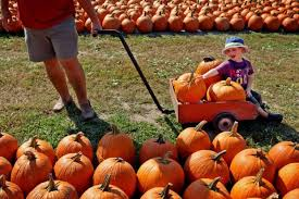 Great Pumpkin Patch Arthur Il by Rombach Family Feud Threatens Future Of Chesterfield Farm Beloved
